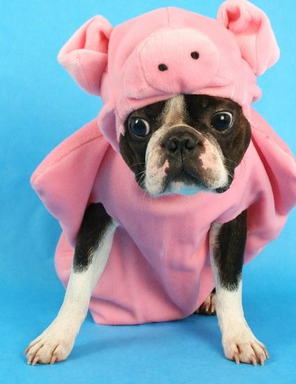 inneren schweinehund bekämpfen